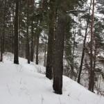 Vieta žiemą